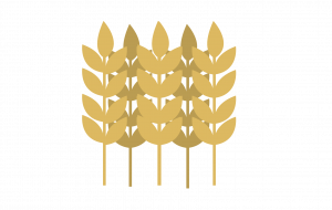 wheatpng